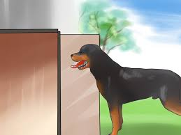 Home Design Story Dog Bone by How To Teach Your Dog To Love The Crate With Pictures Wikihow