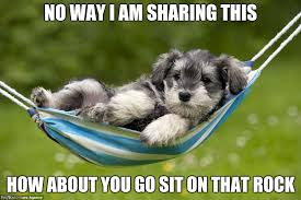Funny Puppy Memes - spoiled dog imgflip