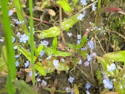 native alaskan plants alaskan wildflowers northern light media