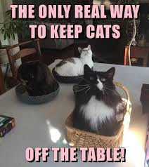 Table Meme - the only real way lolcats lol cat memes funny cats funny