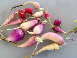 Fall Root Vegetables - super easy roasted fall root vegetables fresh from nancy u0027s garden