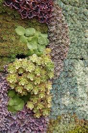 145 best vertical garden images on pinterest vertical gardens