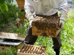 beekeeping for beginners bee built