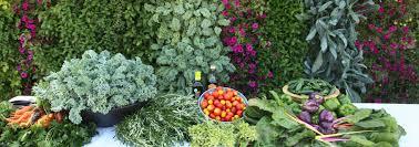 wall garden livewall