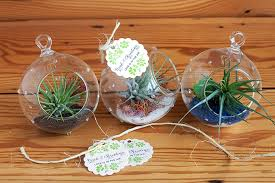 plant wedding favors air plant wedding favors weddings ideas from evermine