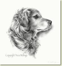 dog portraits and drawings in charcoal by tricia wellings
