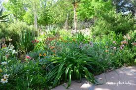 australian native plants for rock gardens video and photos california road trip day two a very secret garden ramblings