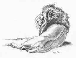 best 25 pencil sketches of nature ideas on pinterest nature