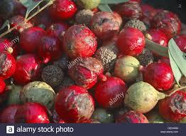 australian native medicinal plants quandong fruit santalum acuminatum native australian bush food