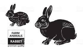 rabbit poster cut of rabbit poster butcher diagram for groceries meat stores