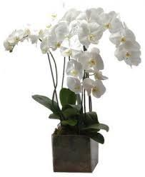 Orchid Delivery Local City Florist Flower Delivery To Madrid Spain Florist Madrid