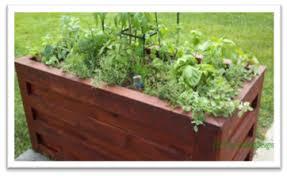 blooms vegetable container garden care tips chicago garden