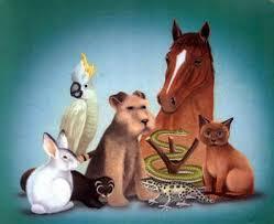 imagenes de animales y cosas refranes de animales y cosas con su significados