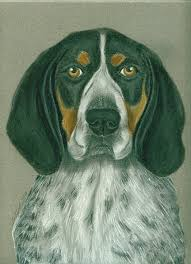 videos of bluetick coonhounds bluetick coonhound painting by linda henthorn