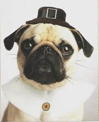 20 best thanksgiving pugs images on pug dogs and
