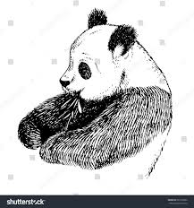 sketch panda bamboo engrave ink draw stock vector 687203962