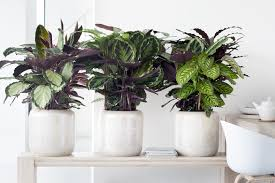indoor plants singapore 5 easy to care for indoor plants to freshen your home tried