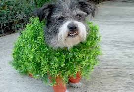 Dog Halloween Costumes Adults Diy Adorable Chia Pet Dog Costume Halloween