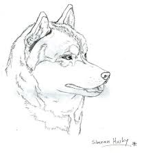 download siberian animal coloring pages