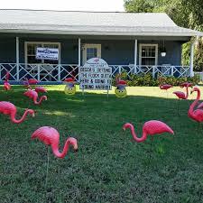 563 best flamingos at large bradenton fl images on