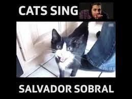 Funny Salvadorian Memes - joke4fun videos cats sing salvador sobral