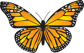 funeral butterflies contact information live butterfly releases