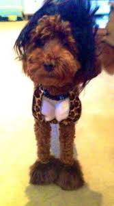 Snooki Halloween Costume Halloween Costumes Dogs Pets Humans