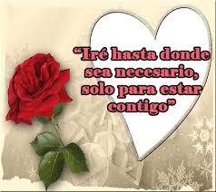 bonitas de rosas rojas con frases de amor imagenes de amor facebook rosas rojas de amor con frases romanticas rosas de amor