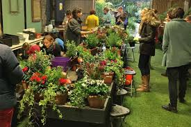 Garden Centre Ideas City Gardener Ideas To Wow Up Your Window Boxes This Winter