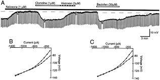 local opioid withdrawal in rat single periaqueductal gray