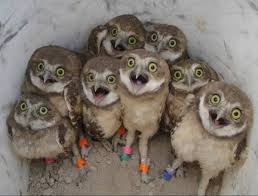 Where Does The Barn Owl Live 10 Awesome Owl Photos For International Owl Awareness Day U S