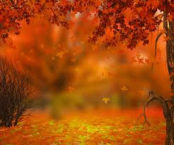 halloween autumn background seven reasons to show trees more love trees4life campaign