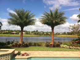 sylvester palm tree sale sylvester date palm landscape install gorgeous landscape