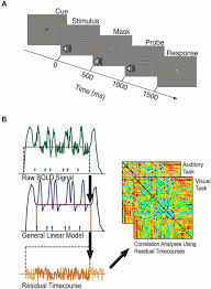 frontiers retinotopic patterns of background connectivity