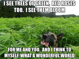 Stoned Dogs Meme - i see trees of green red roses too i see them bloom for me and you