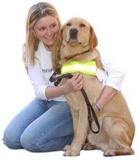 Training A Guide Dog For The Blind 14 Best Guide Dogs For The Blind Images On Pinterest Guide Dog
