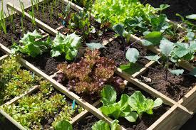 Urban Veggie Garden - urban vegetable garden ideas to eat more healthy at home