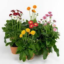 Low Light Indoor Flowers Houseplants The Little Light Need U2013 Fresh Design Pedia
