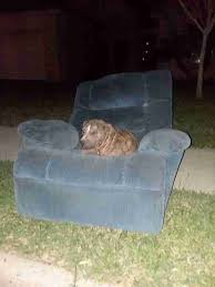Used Armchair Bait Dog Who Lived On Couch Is Rescued In Texas The Dodo