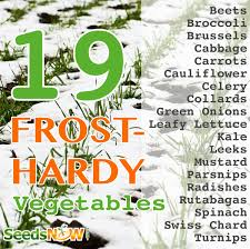 19 frost hardy vegetables to plant this fall