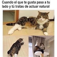 Gato Meme - 21 divertidos memes de gatos que te har磧n decir ese soy yo