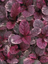 plants for wet soil flowering plants hgtv