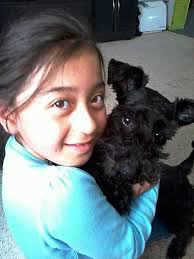 affenpinscher a donner slt family calls for responsible pet owners after dog death
