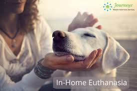 pet euthanasia at home in home euthanasia journeys mobile veterinary services