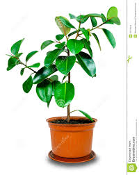 potted plant clipart clipart panda free clipart images