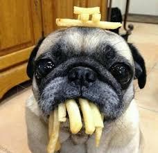 Sad Pug Meme - top 10 pug memes tail threads