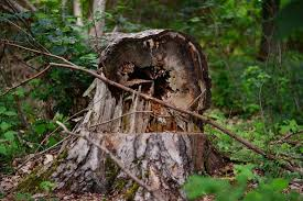 tree care washington and oregon westcoast tree care