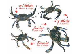 maryland blue crabs cameron u0027s seafood