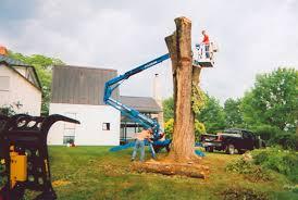 quality tree service llc