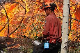 Bc Wildfire Data by Hype Doesn U0027t Help Forest Fire Efforts 100 Mile House Free Press